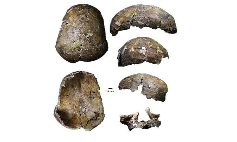 Ancient 'Deep Skull' from Borneo full of surprises