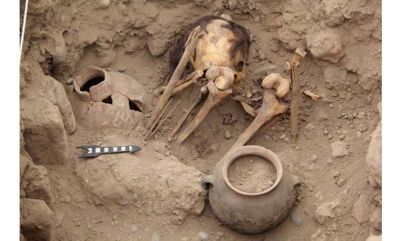 Ancient Wari Empire likely did not cause large shifts in population genetic diversity