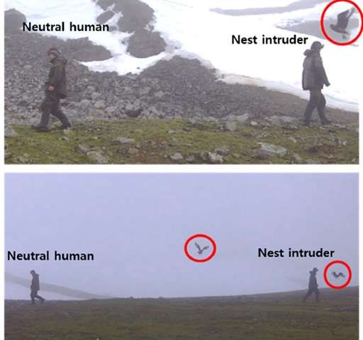 Antarctic birds recognize individual humans