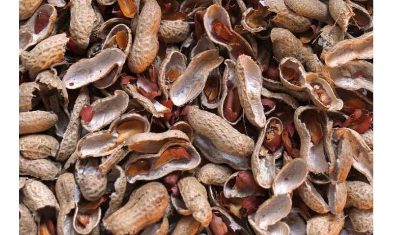 Biofilter made from peanut shell degrades air pollutants