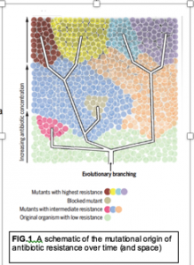 Biology education in the light of single cell/molecule studies