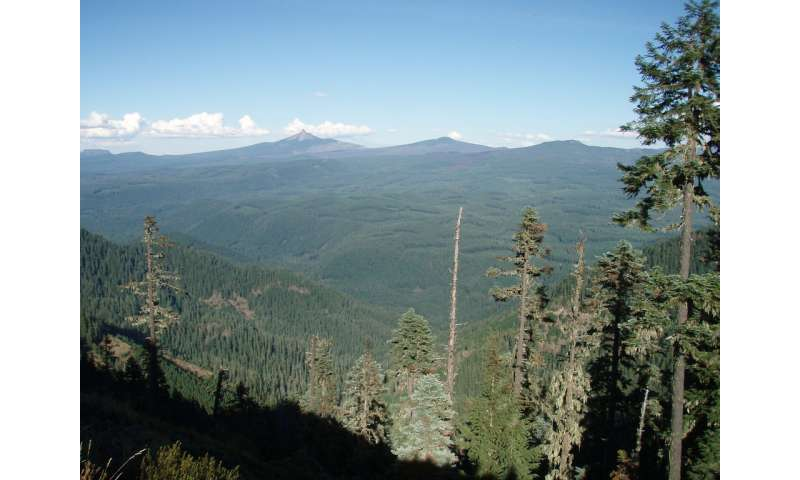 Carbon stored in Pacific Northwest forests reflects timber harvest history