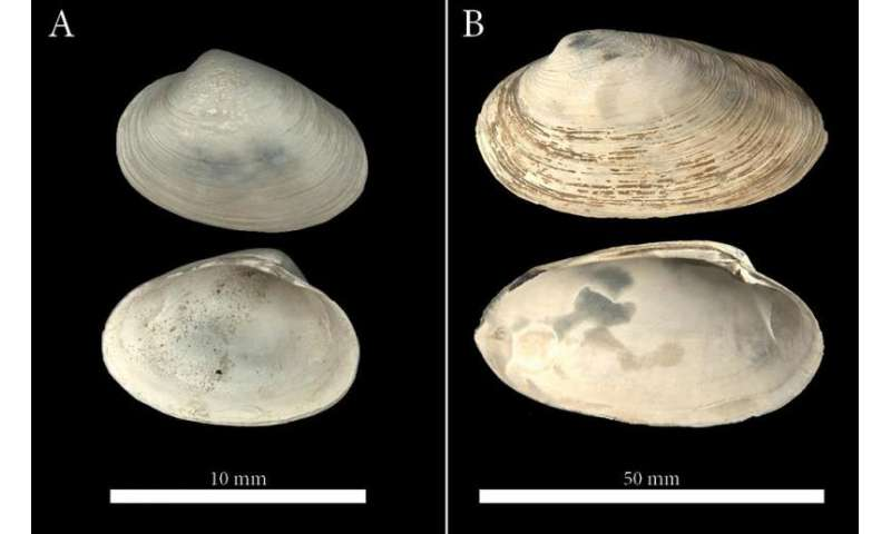 Clams help date duration of ancient methane seeps in the Arctic