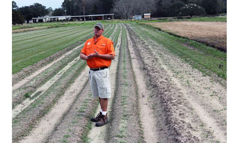 Clemson scientist helping to restore ancient Southern wheat