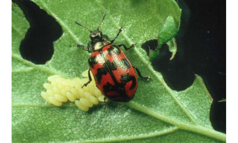 Climate warming sometimes—but not always—benefits insect pests
