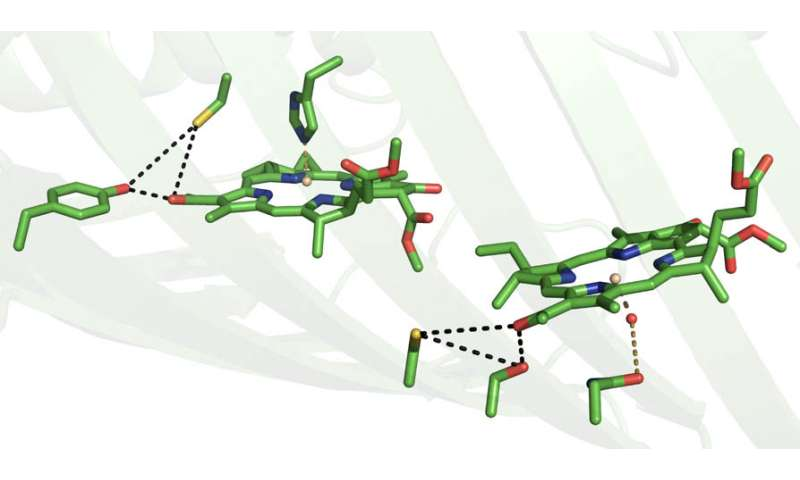 Controlling light: New protection for photosynthetic organisms