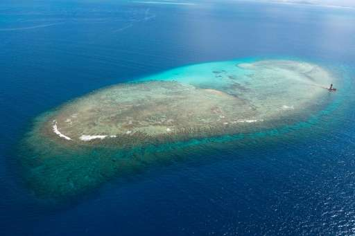 Coral reefs in New Caledonia in the south Pacific