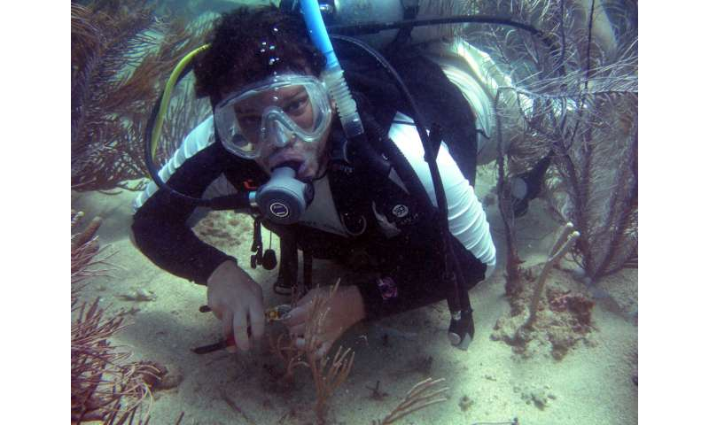Corals survived Caribbean climate change