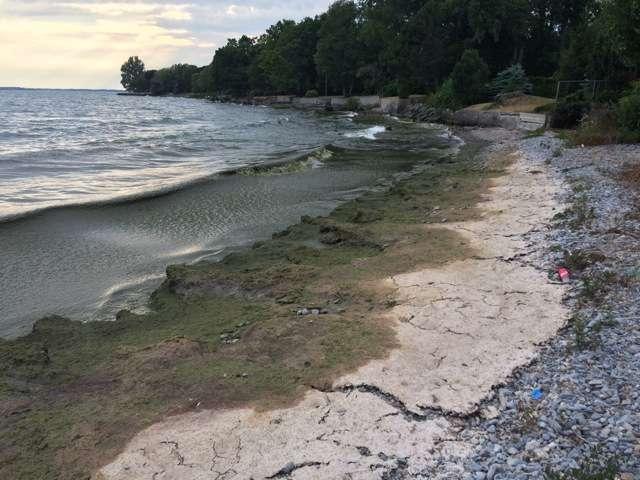 Cut phosphorus to reduce algae blooms, say scientists
