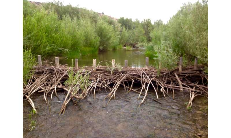 Dam good! Beavers may restore imperiled streams, fish populations