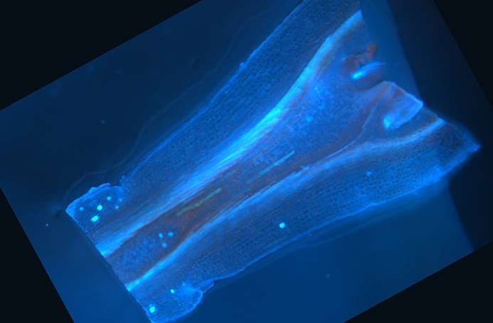 Details revealed for how plant creates anticancer compounds