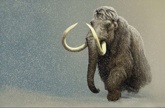 Woolly mammoth study spanish