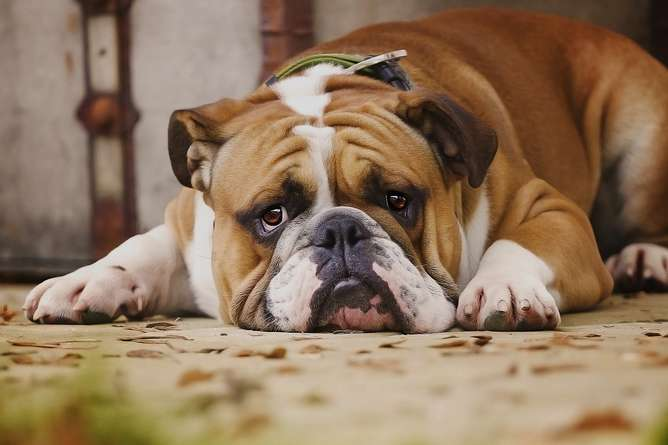 Dogs really can tell how their owners are feeling, new studyshows