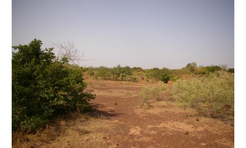 Drought-tolerant species thrive despite returning rains in the Sahel