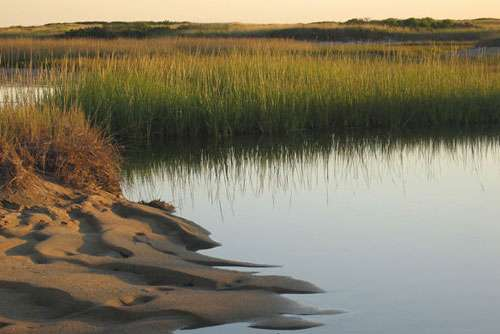Ecologists test stability of Maine ecosystem over two decades