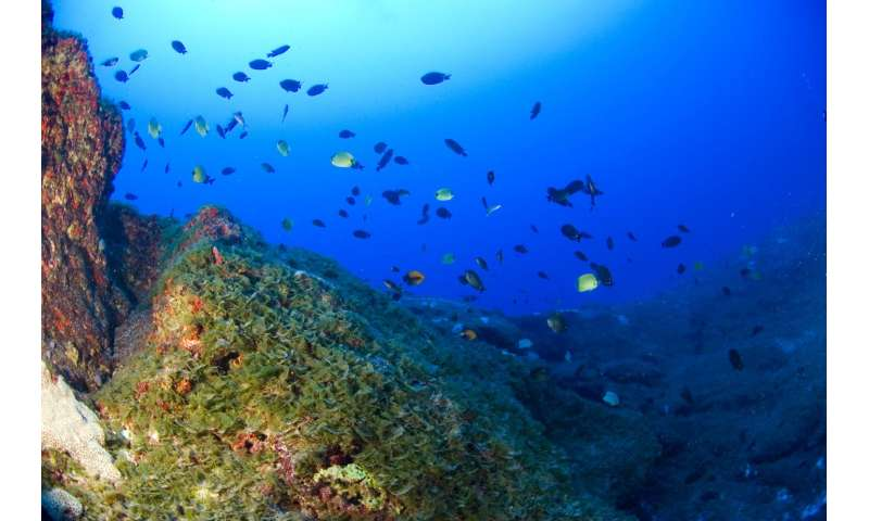 Extensive deep coral reefs in Hawaii harbor unique species and high coral cover