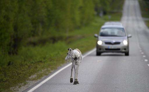 Finnish phone app finds reindeer, helps to avoid road kill