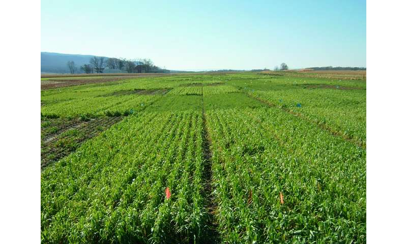 First-of-kind study suggests cover crop mixtures increase agroecosystem services
