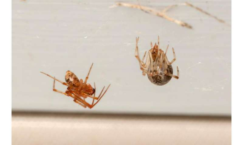 First study of arthropods in US homes finds huge biodiversity