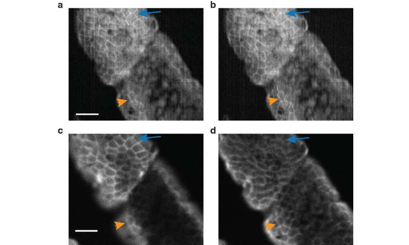 Fluorescent holography: Upending the world of biological imaging