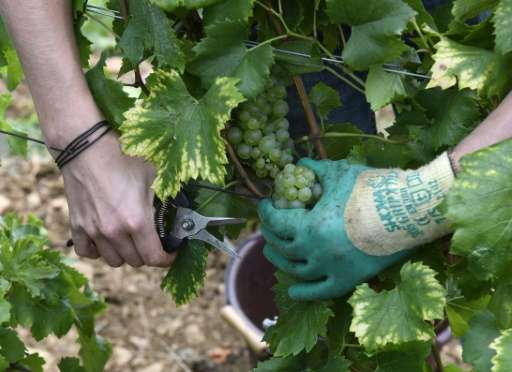 France is the world's top wine exporter by value, accounting for 29 percent of the market at 8.2 billion euros ($9.1 billion) in