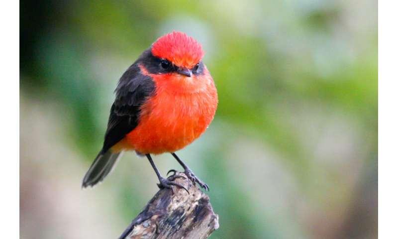 Galápagos faces first-ever bird extinction