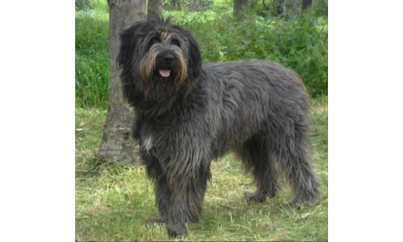 Genome of fiercely protective Fonni's Dog reflects human history of Sardinia