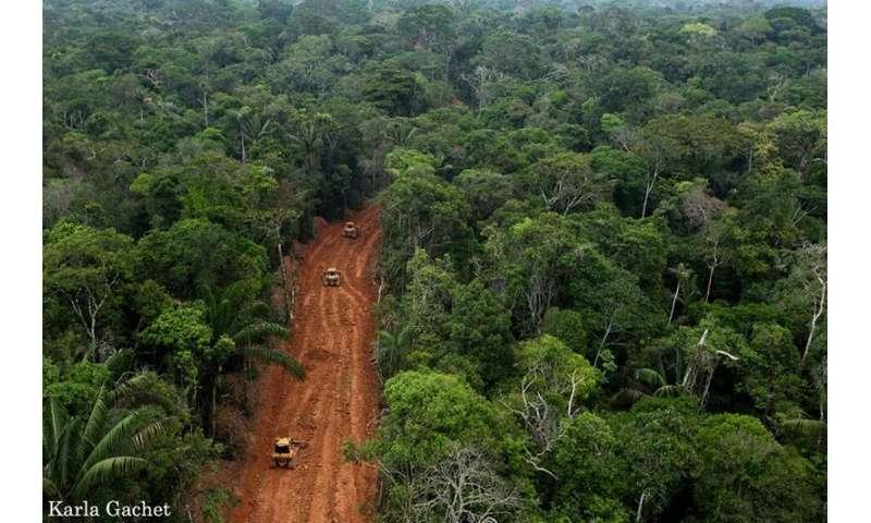 Global habitat loss still rampant across much of the Earth