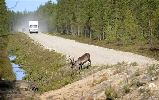 Glowing antlers failed, so Finns try app to save reindeer