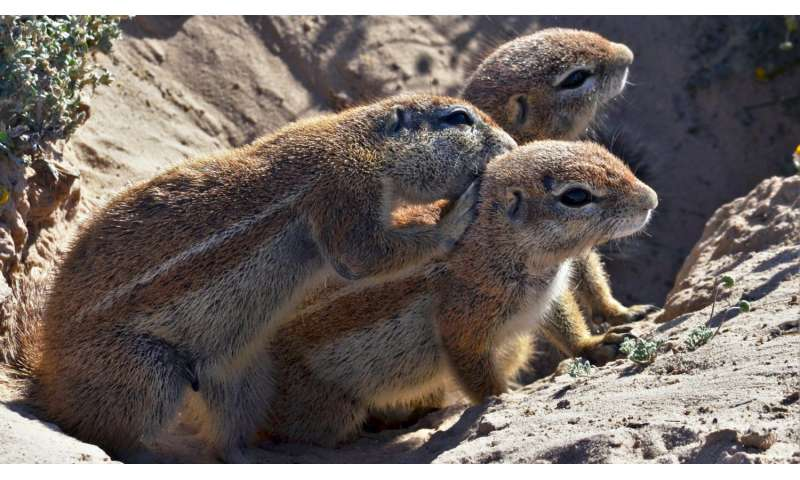 Ground squirrels use the sun to hide food