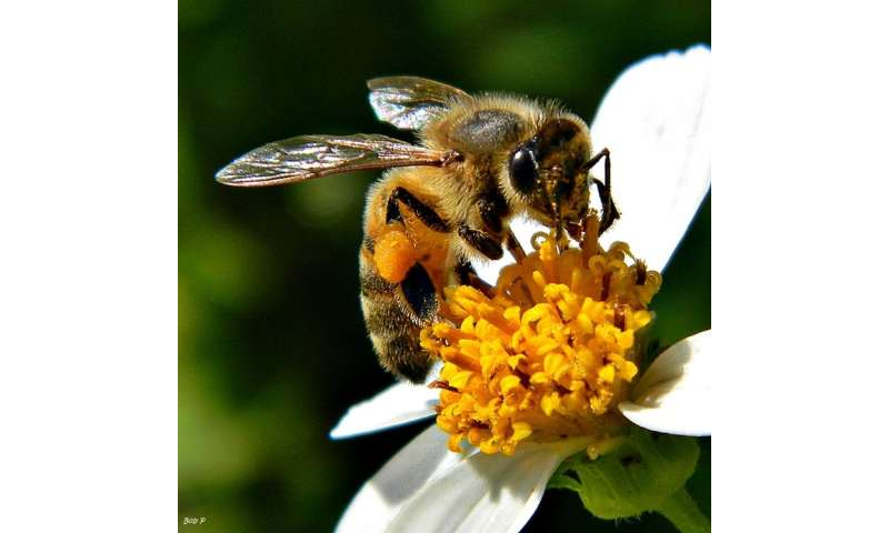 How are pollinators faring with Anthropogenic change?