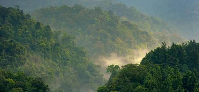 How effective are tropical forest conservation policies?