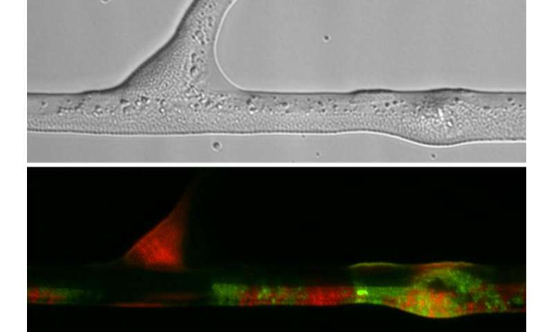 How fungi can improve the genetic makeup of bacteria
