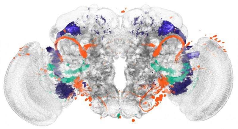 Identifying brain regions automatically