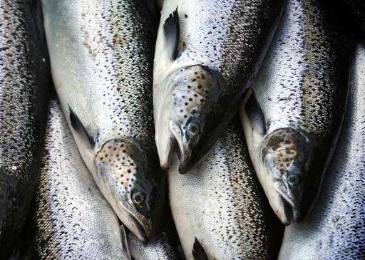 In Atlantic salmon fight, Greenland proves a sticking point