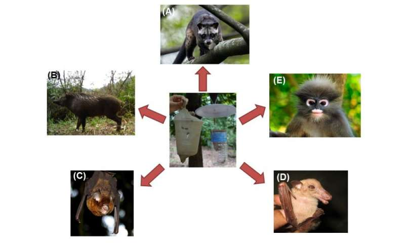 Is mammal DNA in the guts of blowflies a feasible mammal monitoring tool?
