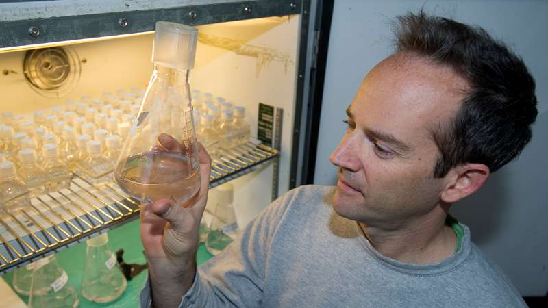 Major source of methanol in the ocean identified