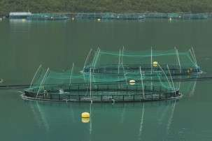Making fish farming more sustainable
