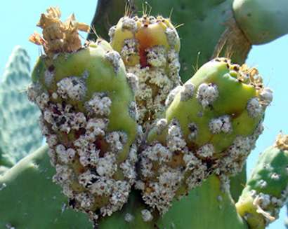Mexican researchers observe natural insect control without pesticides