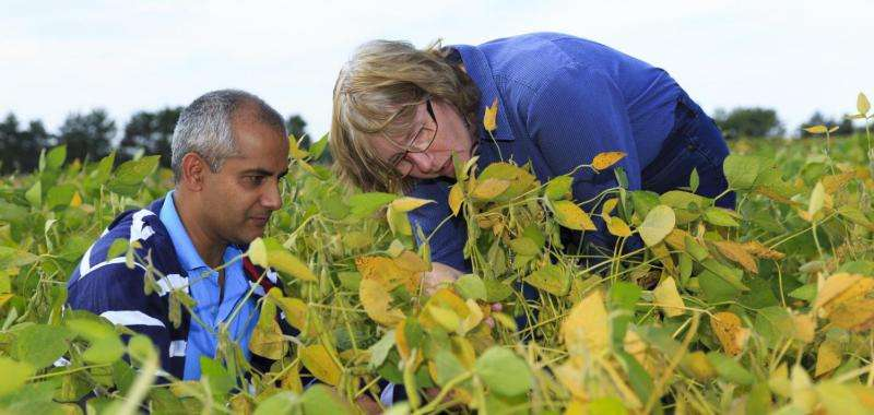 Microbiologists unravel relationship among plants, mycorrhizal fungi