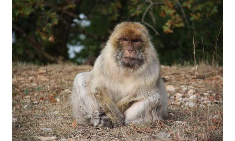 Monkeys get more selective with age
