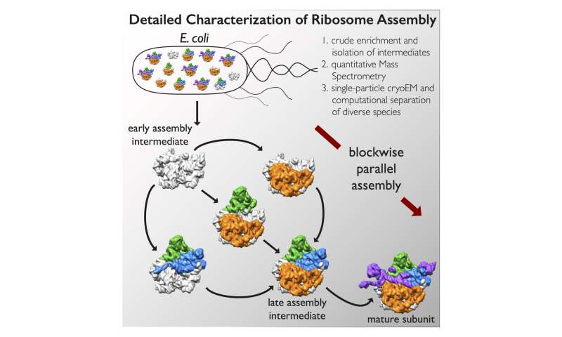 Multi-institutional collaboration uncovers how molecular machines assemble
