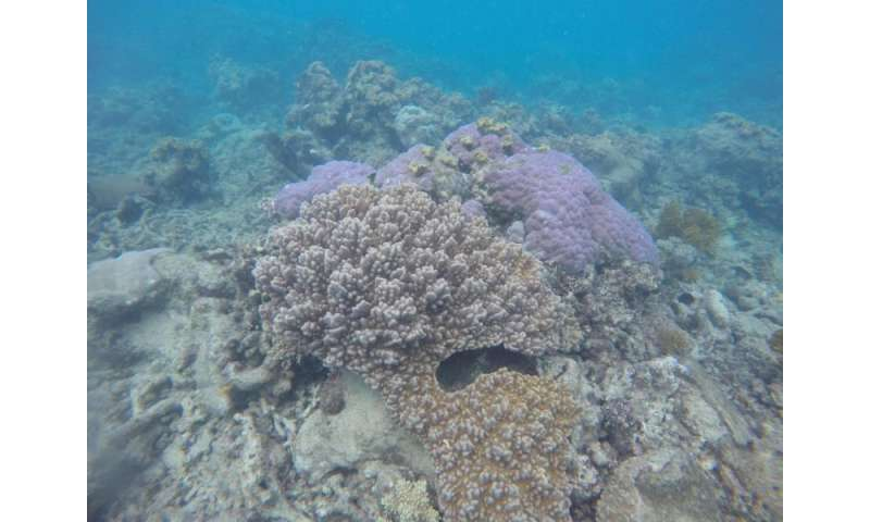 NASA begins study of Australia's Great Barrier Reef