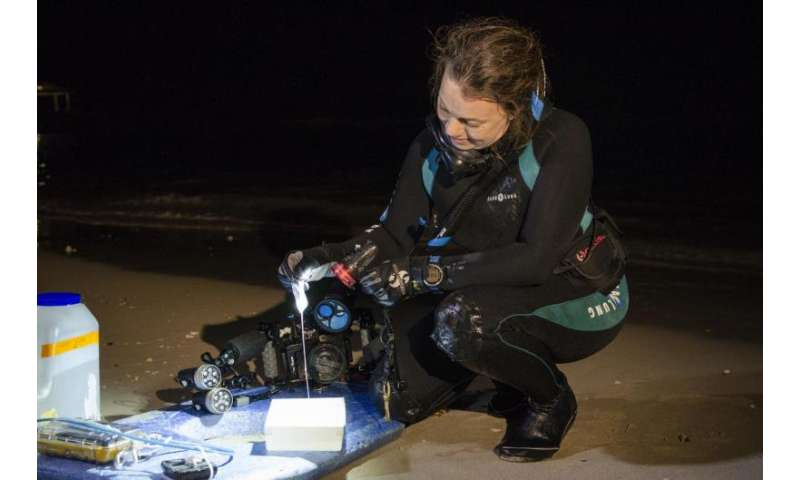 New experiments determine effective treatments for box jelly stings