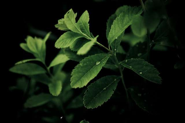 New insight into how plants make cellulose