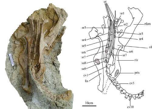 New leptoceratopsid found from the Upper Cretaceous of Shandong Province, China