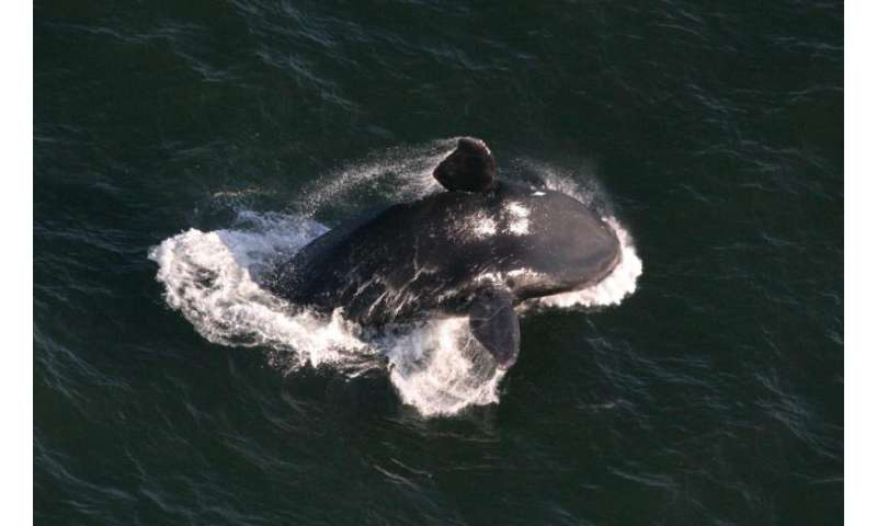 New maps reduce threats to whales, dolphins