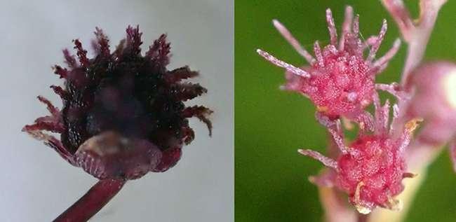 New plant species discovered on Yakushima