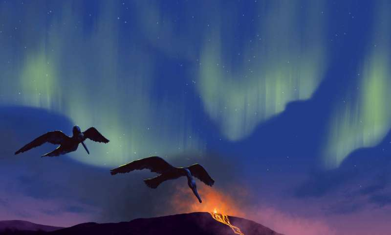 New prehistoric bird species discovered