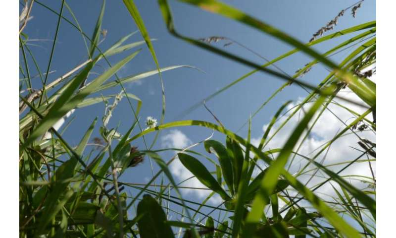 Plant response to carbon dioxide emissions depends on their neighbours